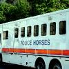 POLICE HORSES OMG