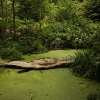 greenpool2